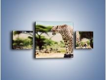 Obraz na płótnie – Cała zwinność geparda – trzyczęściowy Z315W4