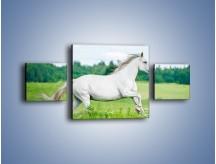 Obraz na płótnie – Biały koń i leśna polana – trzyczęściowy Z317W4