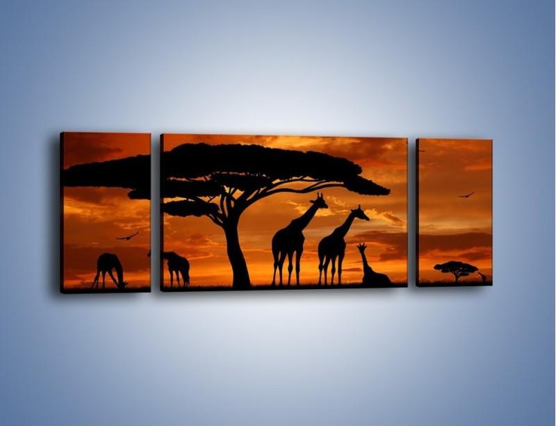 Obraz na płótnie – Żyrafy wieczorową porą – trzyczęściowy GR266W5