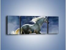 Obraz na płótnie – Bieg z koniem przez noc – trzyczęściowy GR339W5