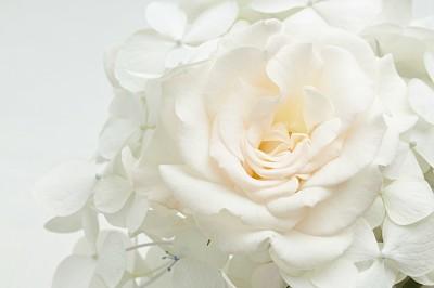 Czysta biel kwiatów - K712