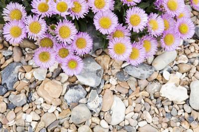 Kolorowe kamienie czy małe kwiatuszki - K146