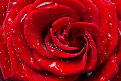 Kwiat pełen miłości - K179