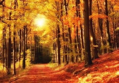 Lasem w stronę słońca - KN257