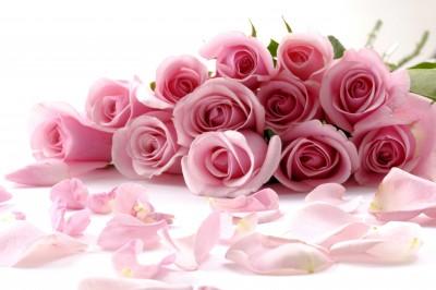 Nadal piękne róże - K167