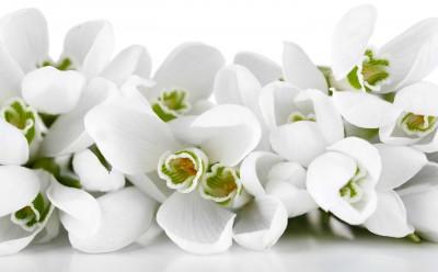 Niewinne kwiaty z zielonymi oczkami - K988