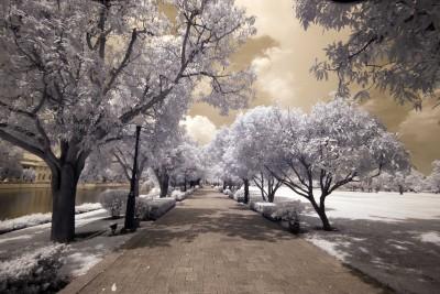 Parkowa aleja w sepii - KN734