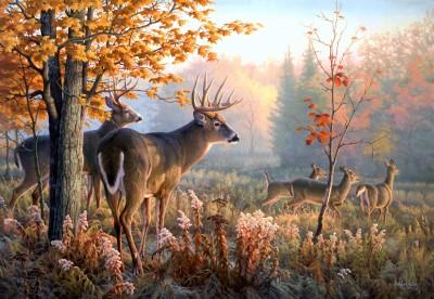 Randka jeleni z sarnami - Z343