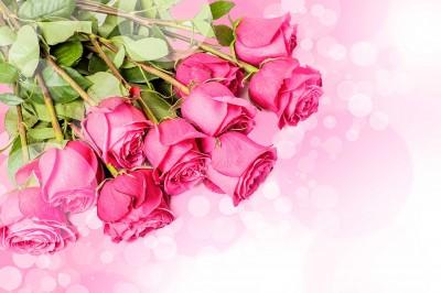 Róże do góry nogami - K270
