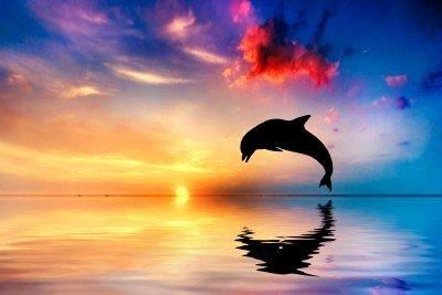 Delfin i jego odbicie - Z268