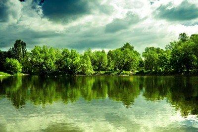 Drzewa w wodnym odbiciu - KN168