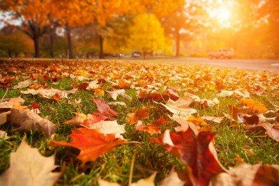 Jesień na trawie - KN966