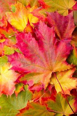 Jesień w liściach - KN131