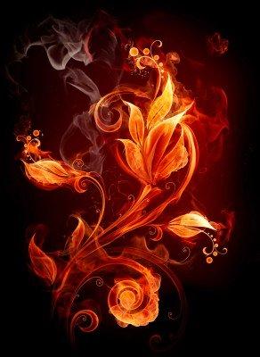 Kwiat w płomieniach - GR526