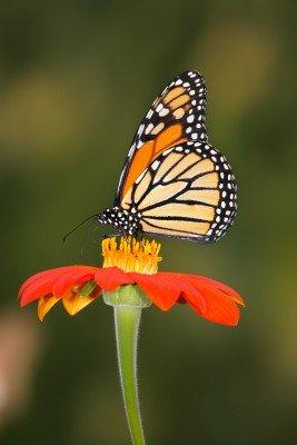 Motyl w kolorach wiosny - Z022