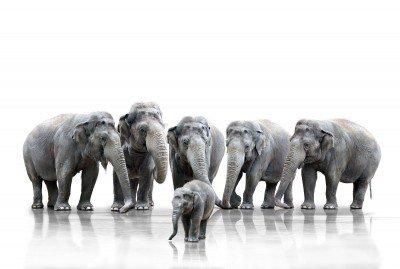 Na przyjęciu u słoniątka - Z209