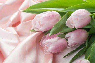 Odpoczynek tulipanów na atłasie - K050