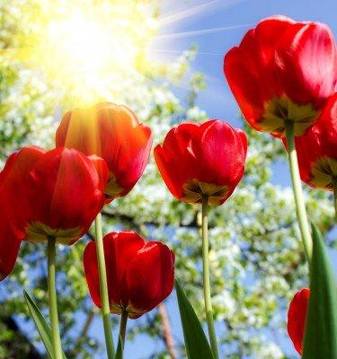 Słońce w kwiatowych łodygach - K865
