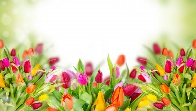 Tulipanowe bukieciki - K763